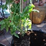 Planteringshinkar