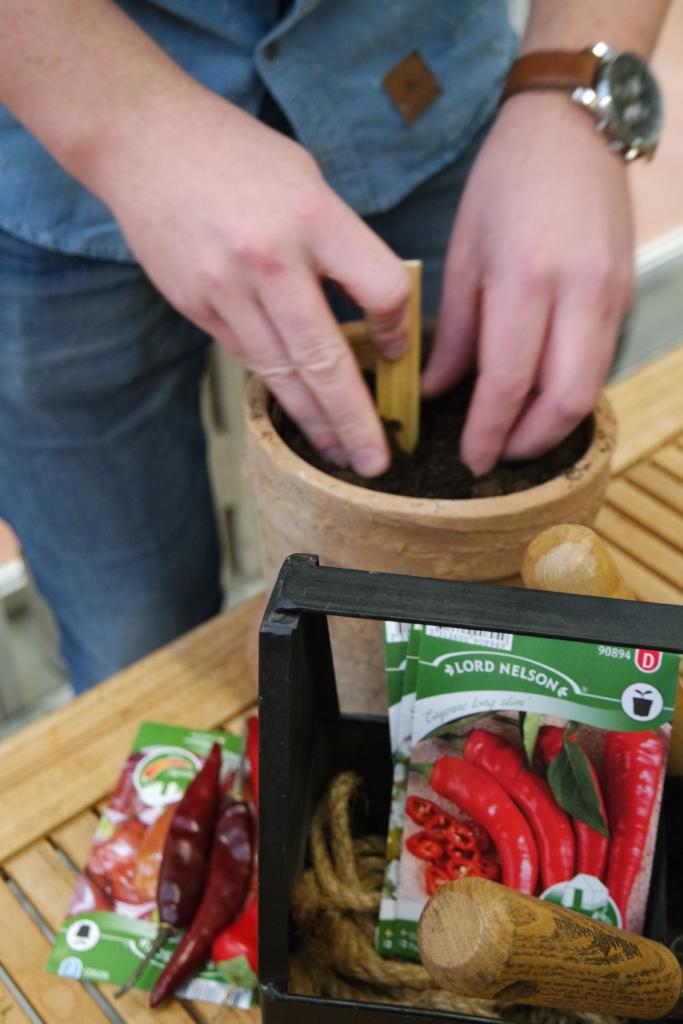 Så din egen chili – det finns massor av olika sorter av chili att pröva