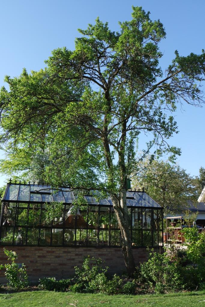 Placering av växthuset