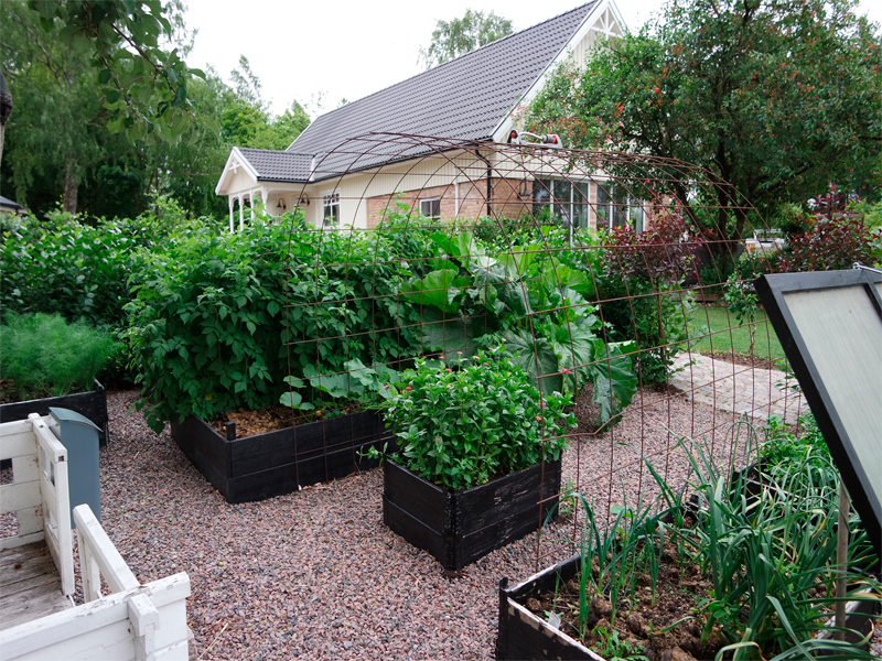 Odla i pallkragar. odla hemma. närodlat. eco odling