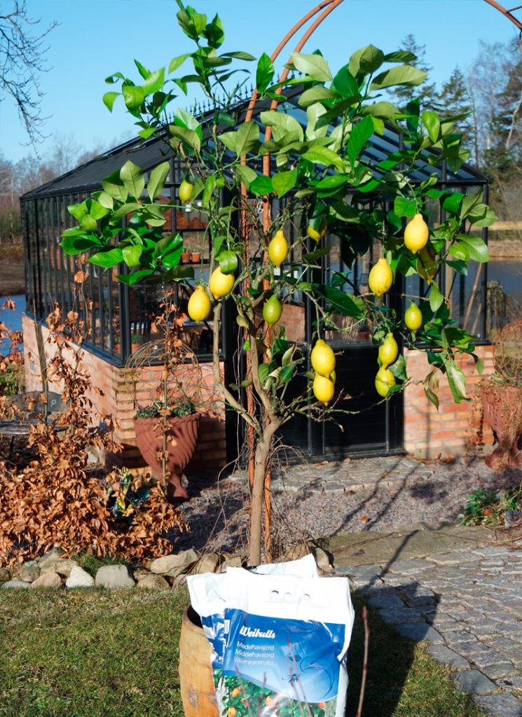 omplantering medelhavsväxter. special jord