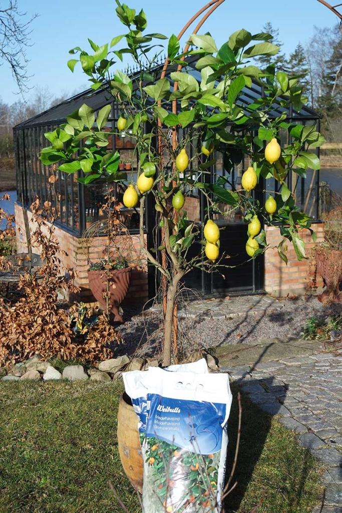 Medelhavsväxter i trädgården