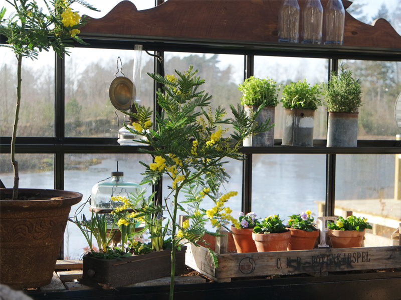 Såbädd i växthuset