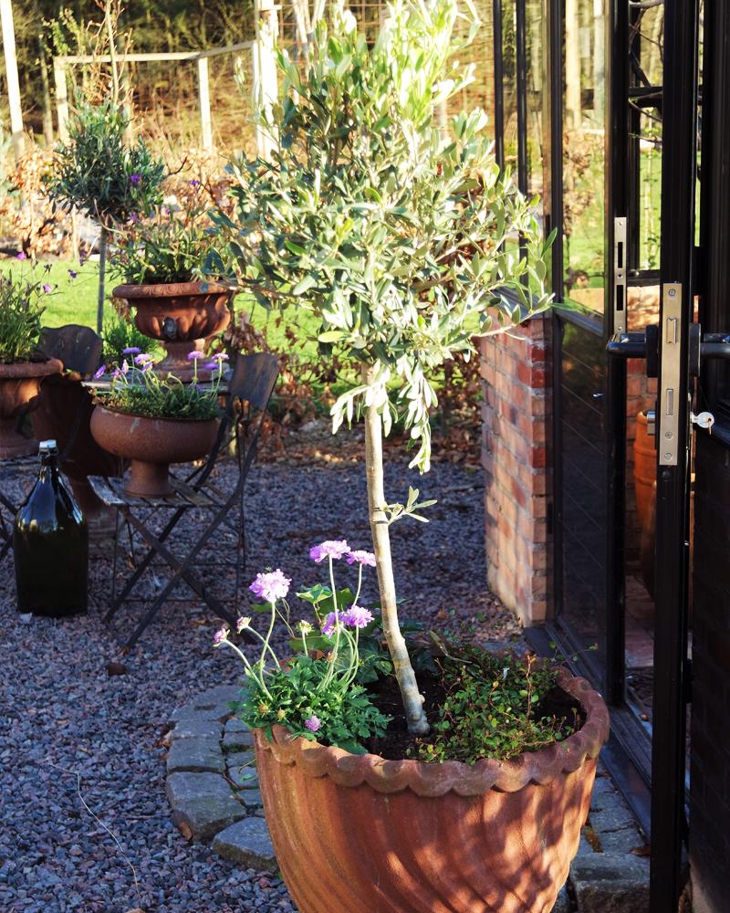 Levande krukor i trädgården