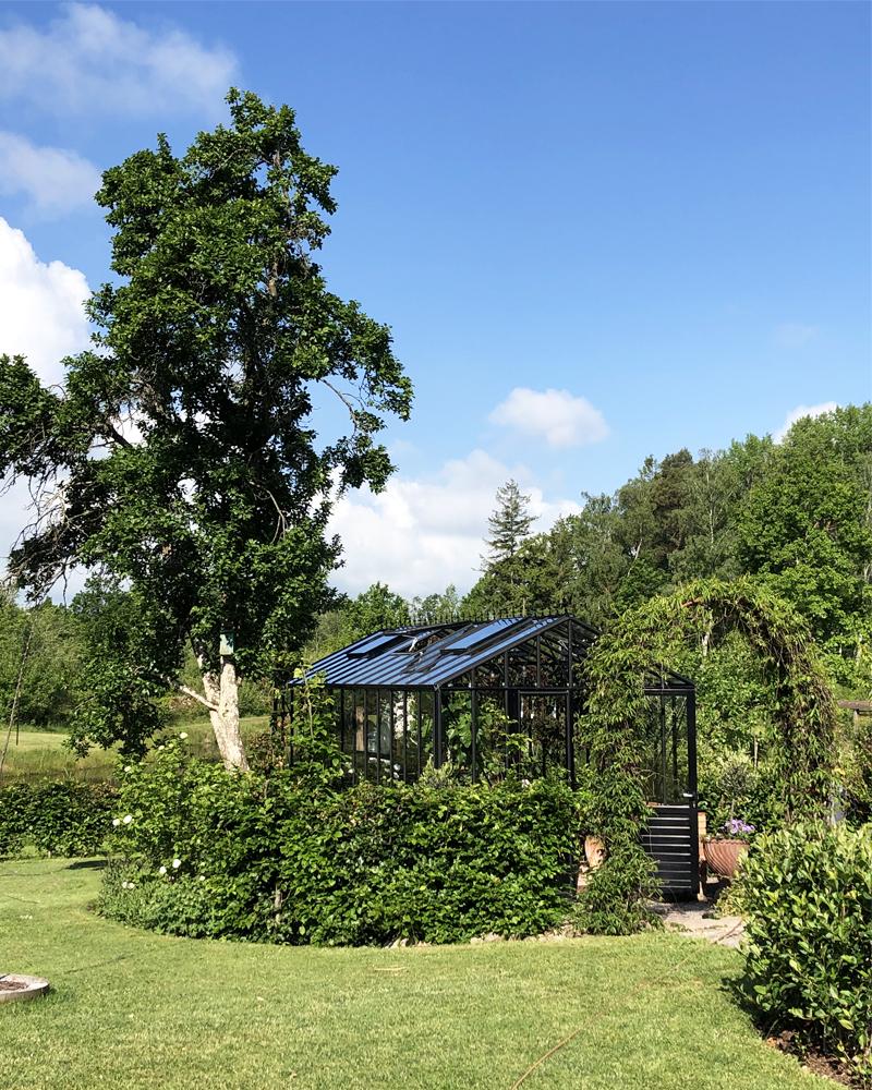 Skuggning i växthuset - plantera ett träd!