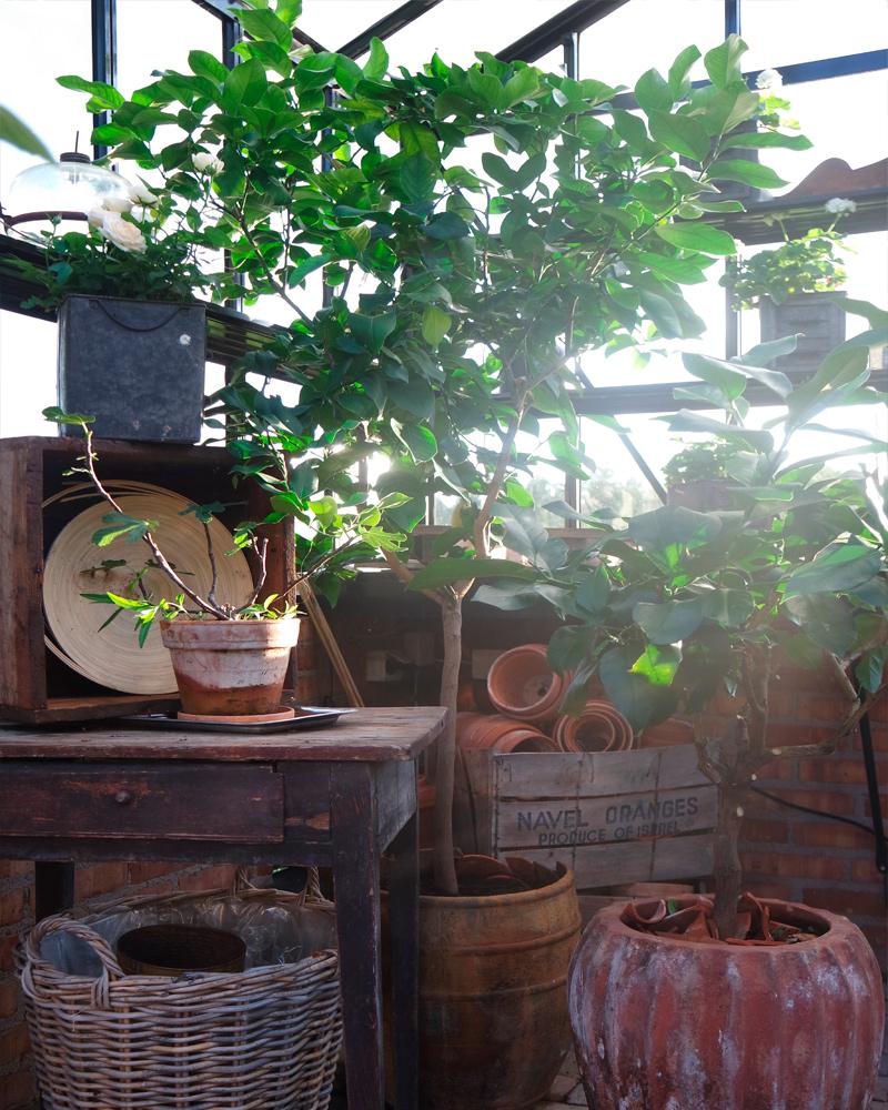 Ohyra i växthuset