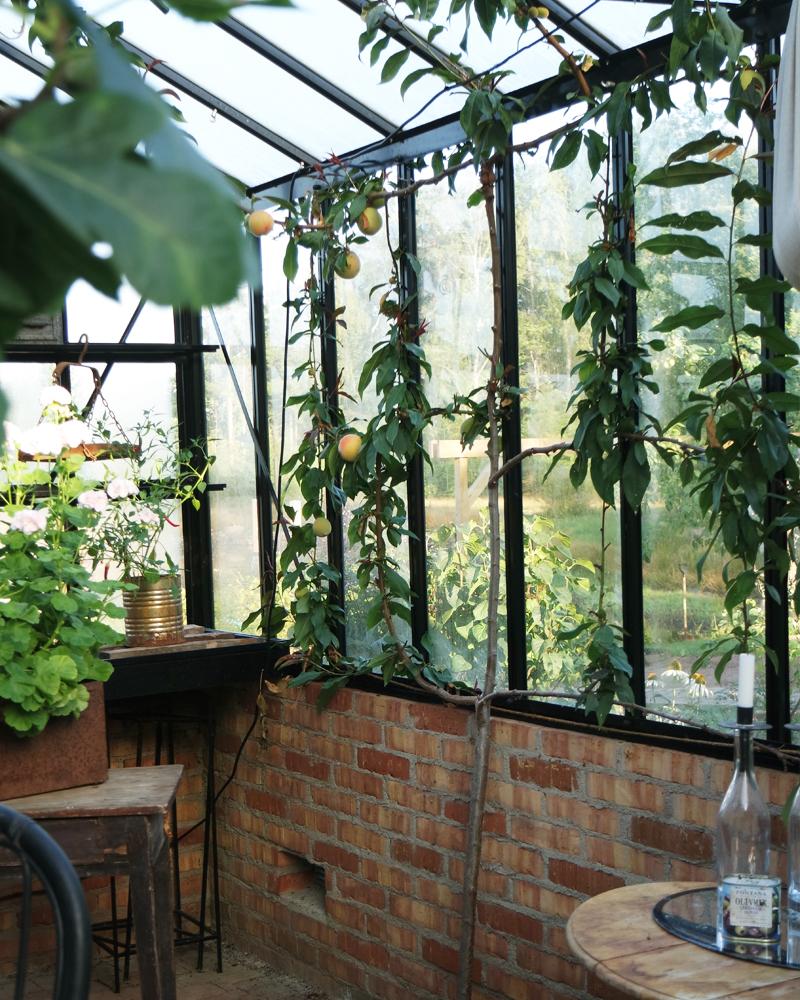 Ta hem de exotiska växterna.