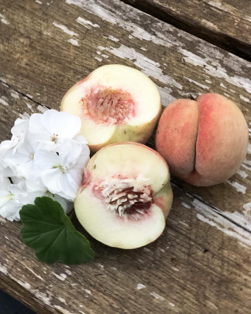 Persikoträd i växthuset.