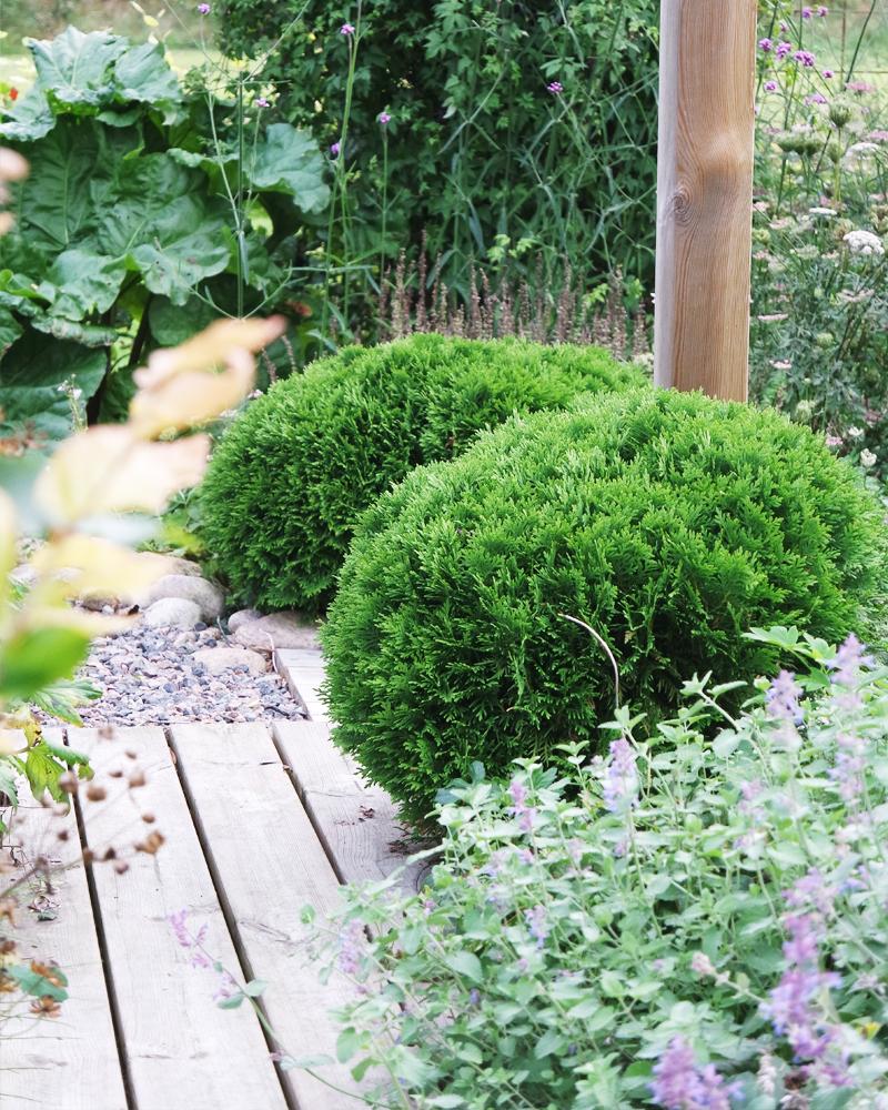 Stora planteringsveckan