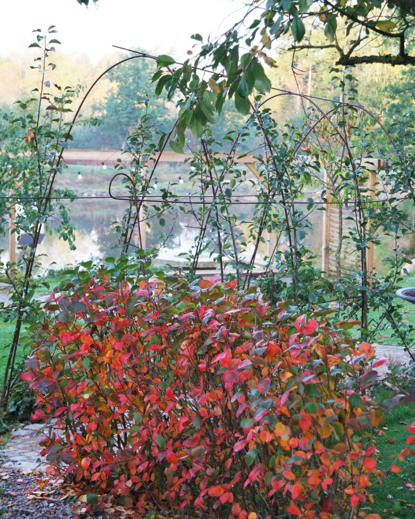 övervintra växter
