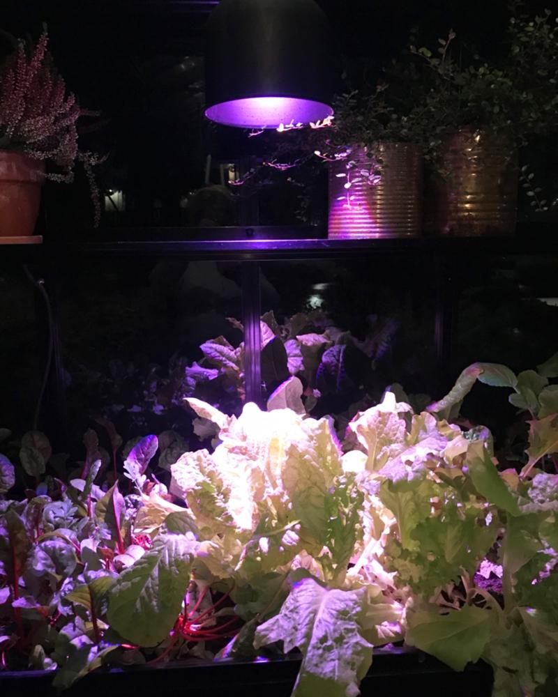 Belysning växthus