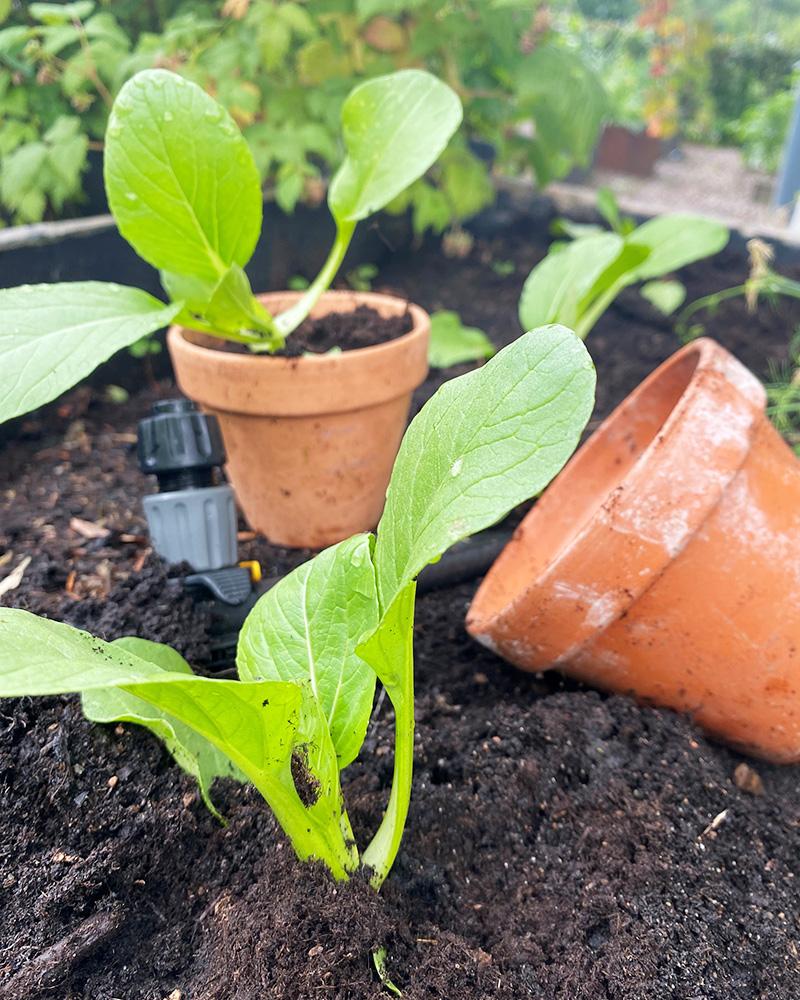 Snabba & smarta grönsaker